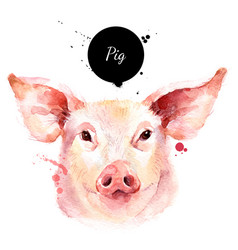 watercolor hand drawn pig head painted sketch vector image