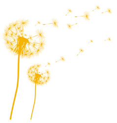 silhouette of a dandelion on a white background vector image