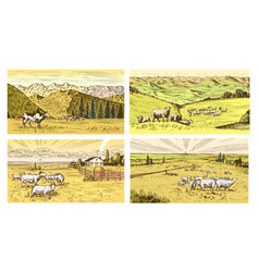 Rural meadow set a village landscape with sheep vector