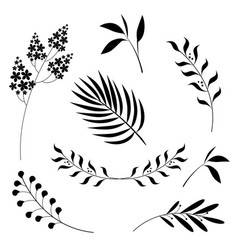 Set graphic drawings flowers and leaves on w vector