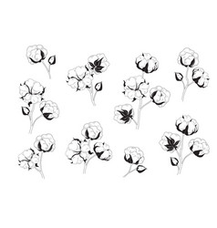 Cotton flower set natural material floral vector