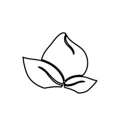 Flower silhouettte in black and white vector