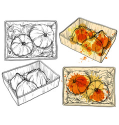 Hand drawn pumpkin in paper box watercolor drops vector