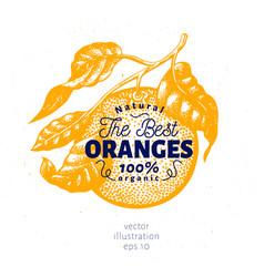 Orange branch hand drawn vector