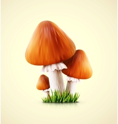 Three mushrooms vector image