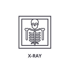 x ray thin line icon sign symbol vector image