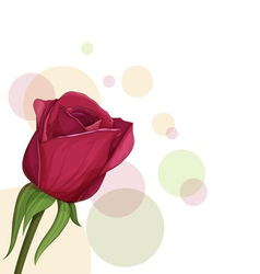 burgundy roses vector image vector image