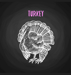 Bird turkey in chalk style on blackboard vector