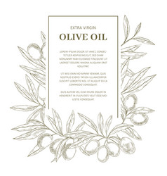Olive oil label template vector