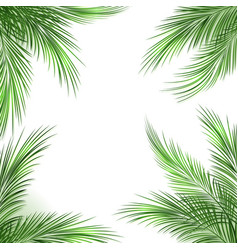 Palm leaves frame vector
