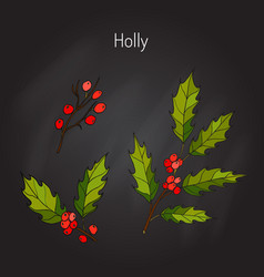holly tree branch vector image vector image
