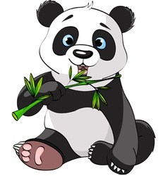 baby panda sitting and munching on bamboo vector image vector image