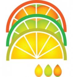 citrus fruit slices vector image vector image