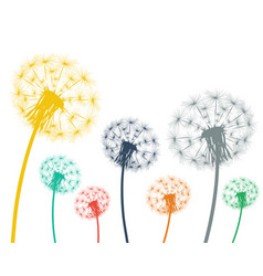multi-colored dandelions on a white background vector image vector image