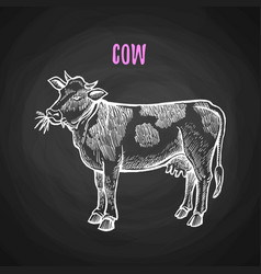 Animal cow in chalk style on blackboard vector