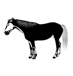 Horse bw vector