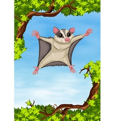Sugar glider flying on the tree vector