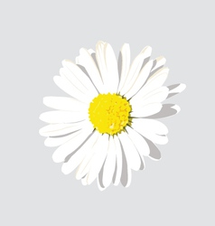 White Flower with background vector image