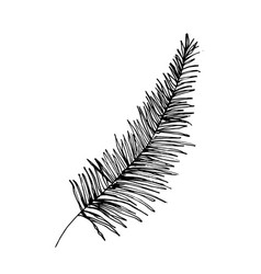 Coconut palm sketch or queen palmae leaves vector