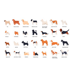 collection adorable dogs various breeds vector image