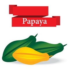 fresh papaya on white background vector image