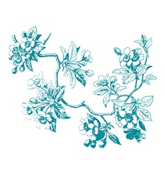 Hand drawn sakura branch with blossom cherry vector image