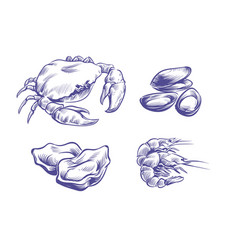 hand drawn seafoods drawn oysters vector image