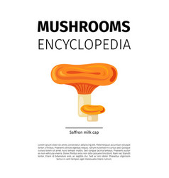 Saffron milk cap mushroom vector