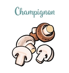 Set of champignon edible mushrooms vector image