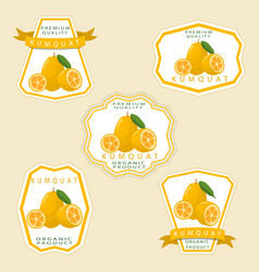 The theme kumquat vector