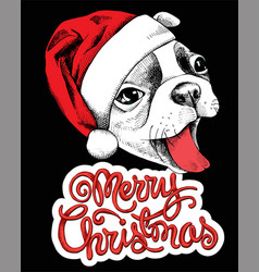 dog christmas vector image
