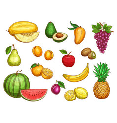 Exotic fresh fruits isolated icons set vector