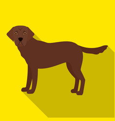 Mastiff single icon in flat stylemastiff vector