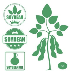 Soybean vector image