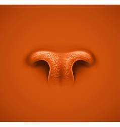 Animals nose vector image vector image