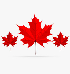 autumn red maple leaf fall isolated on white vector image