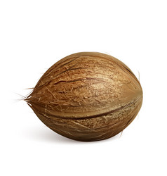 Coconut freshness tropical nut tree fruit vector