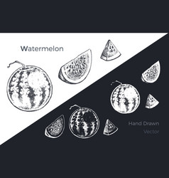 hand drawn watermelon fruits sketch set vector image