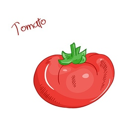 Isolated cartoon fresh hand drawn tomato vector