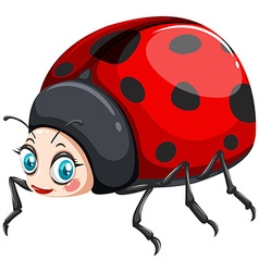 Ladybug with happy face vector image