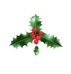 nature holly icon vector image