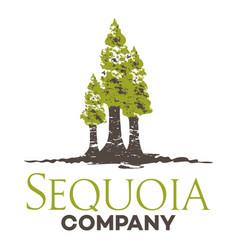 Tree sequoia logo vector
