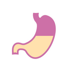 stomach icon flat design vector image