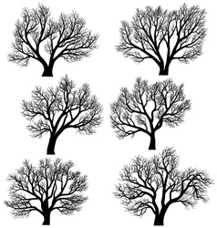 Silhouettes of trees without leaves vector image