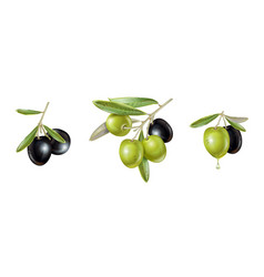 olive realistic set vector image
