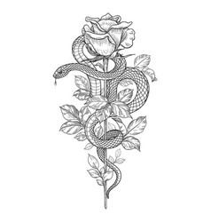 Twisted snake and rose on high stem vector