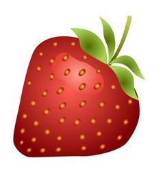 Strawberry fruit isolated on white background vector image