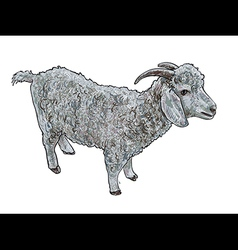 Angora goat- vector image vector image
