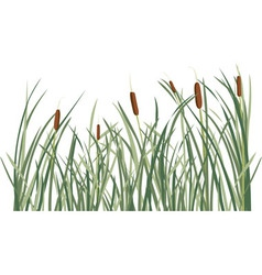 Reed and green grass background vector image