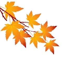 Autumn leaf maple branch vector